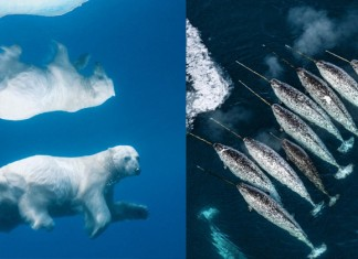 Beautiful Arctic Animals