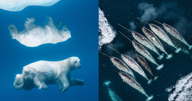 Beautiful Arctic Animals