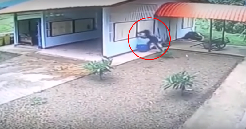 Best Burglary Fails