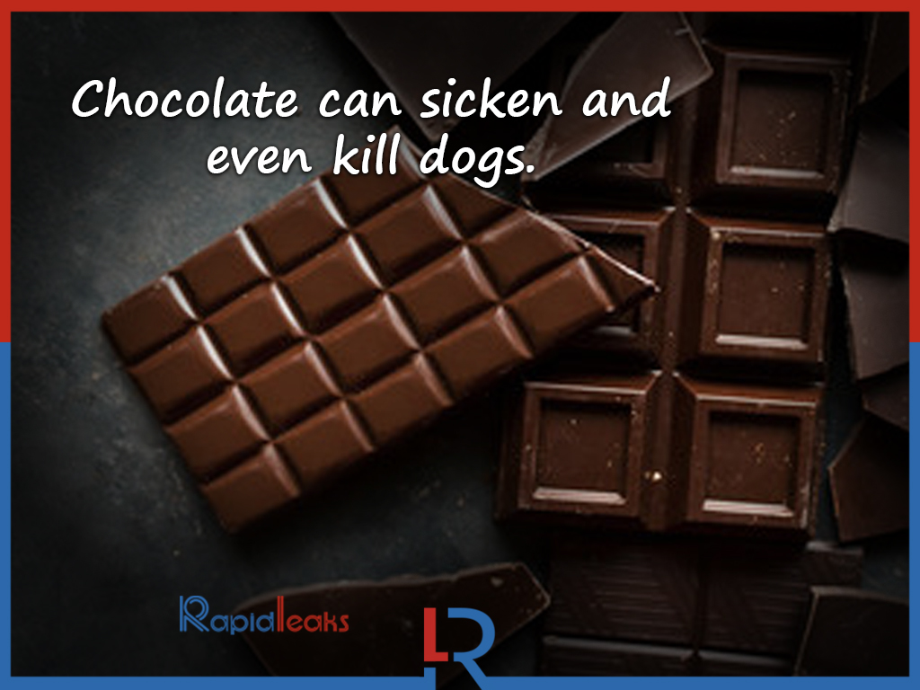Chocolate Facts 7