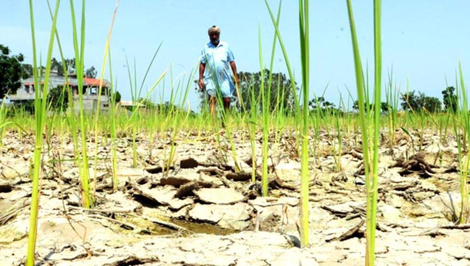 Farmer Commits Suicide In Madhya Pradesh Over Debt Woes