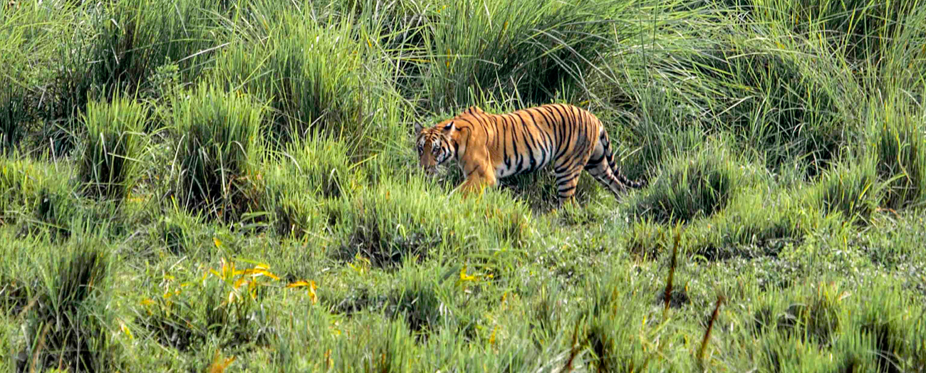 image source: kaziranga-national-park.com