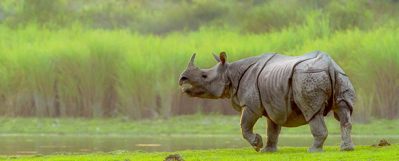 image source: kaziranga-national-park.com
