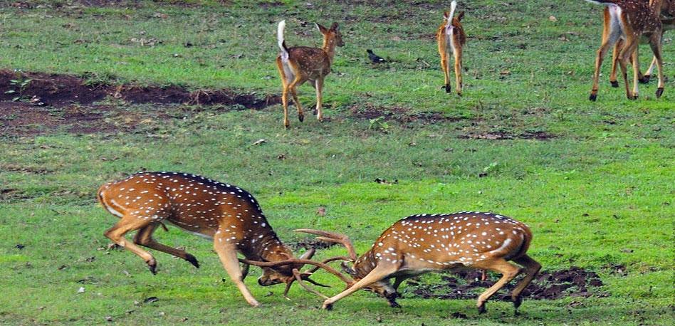 image source: karnataka.com