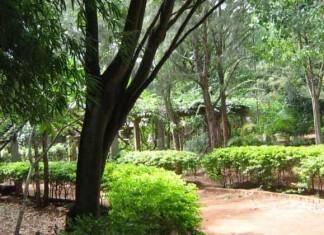 All 185 Trees of Bengaluru's Bannerghatta Road Saved Despite Sanctioning of Metro Line