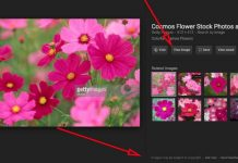 'View Image' Option Removed By Google From Search Results