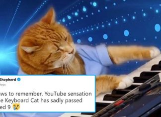 Keyboard cat meme