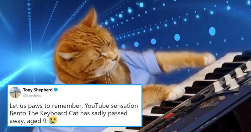 Keyboard cat meme