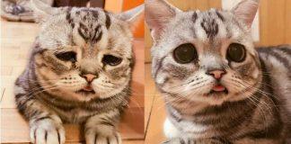 Maggie Liu Saddest Cat
