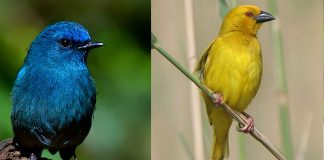 Pretty Birds of India