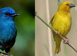Pretty Birds of India