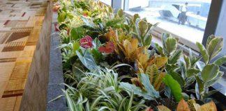 indoor plants at igi airport