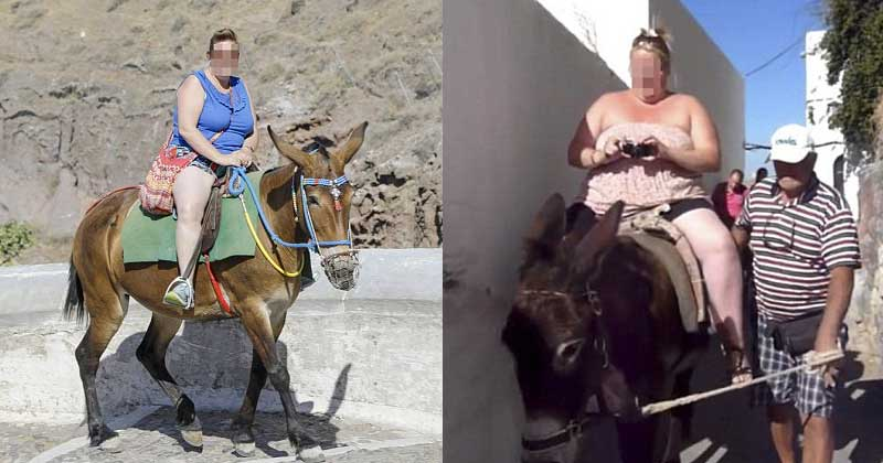 Meet the silly donkey crushing fat tourists of Greece