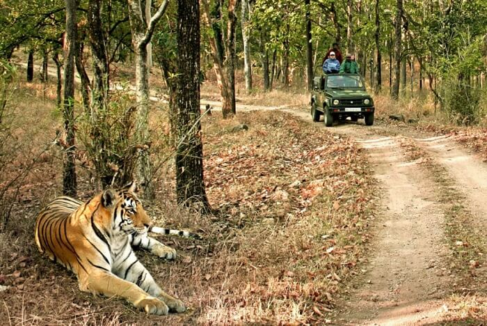 Mudumalai National Park and Wildlife Sanctuary