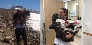 single mum carried dog after it got lost in the snow