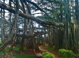 unique trees that grow in India