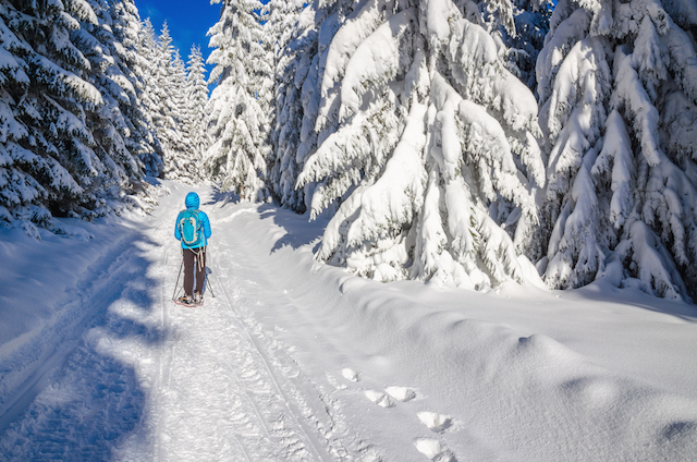 Enjoy Snowshoeing in Switzerland in Winter