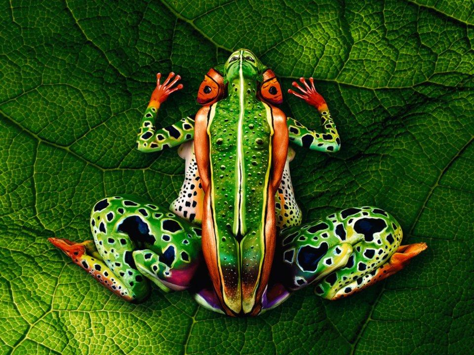 3d Frog
