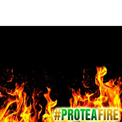 Protea Fire