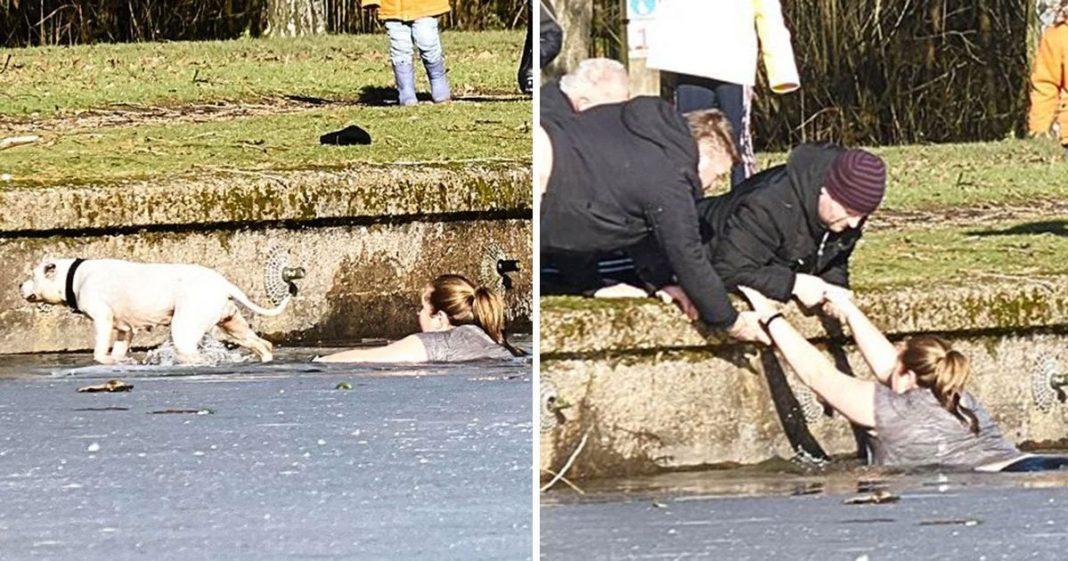 UK lady saves dog