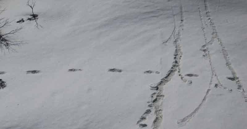 Yeti's Footprints