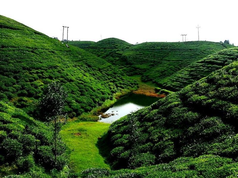 Happy Valley tea garden