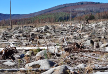 Germany's forests are in a state of crisis
