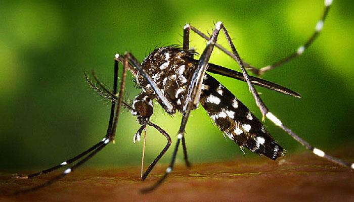 Zika Mosquitoes
