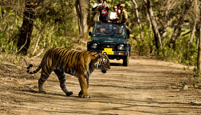 Jim Corbett Tiger National Park