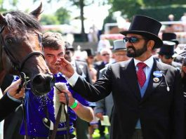 Dubai Ruler Sheikh Mohammed Horse