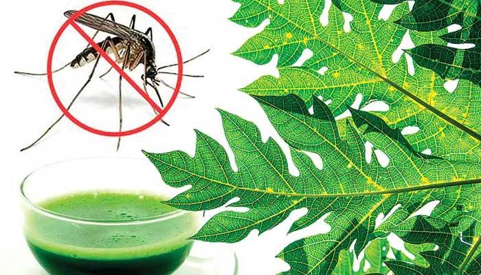 Papaya leaf in Dengue