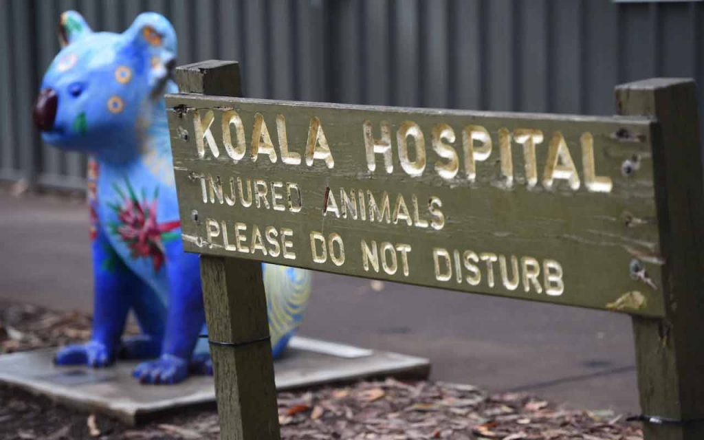 The Port Macquarie Koala Hospital called the incident a 'national tragedy'