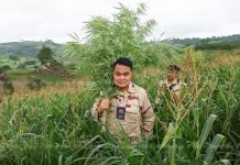 medical marijuana in Thailand