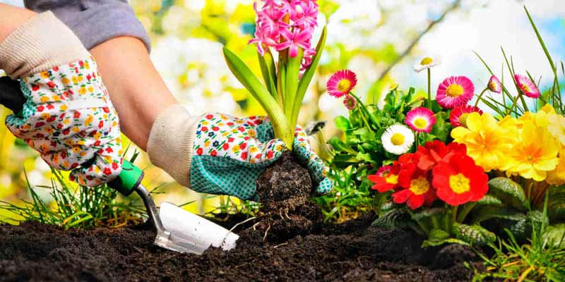 Beginners Gardening Tips