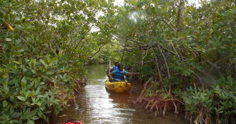 Aguada Backwater Kayaking | Unexplored Places in Goa
