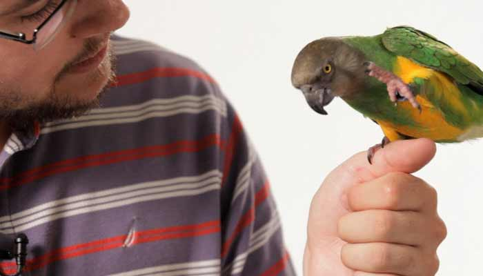 Parrots Talking Like Humans