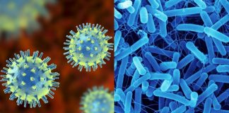 Difference between Virus and bacteria