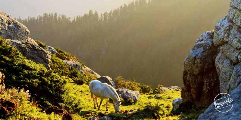 Offbeat Places in Churdhar