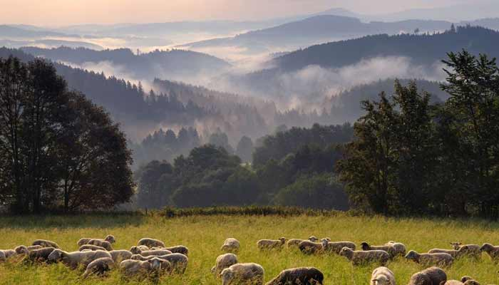 places to visit In Czech Republic - Sumava National Park
