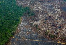 deforestation in amazon forest