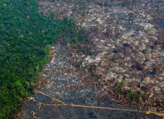 deforestation in amazon forest