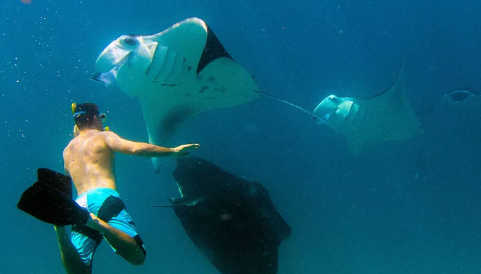Swimming with manta rays in maldives