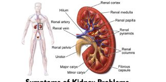 Symptoms of Kidney Problems