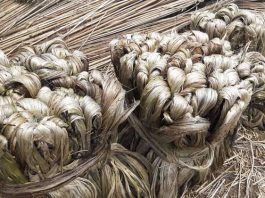 Why is jute called golden fibre