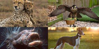 The Kings of the animal kingdom