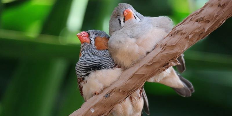 Birds Sleeping On Branch | Why Don't Birds Tip Over In Their Sleep