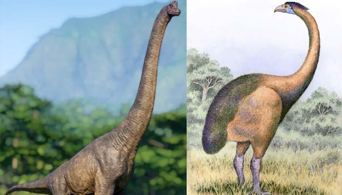 Herbivorous Dinosaurs or The Giant Moa (Dinornis)