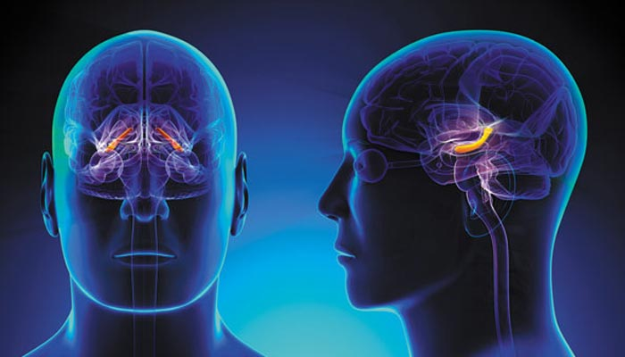 Nerve Connections in the Brain