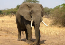 Elephants in Hyderabad