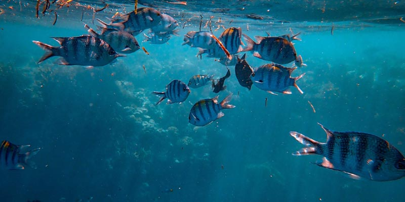 How Fishes Keep Themselves Cool In Summers